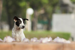 My dog. Little dog waiting for you, welcome to thailand stock photos