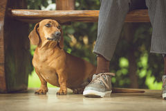 My Dog, My Best Friend Royalty Free Stock Photography