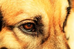 My dog's eye Royalty Free Stock Photography