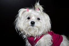 My dog Stock Image