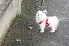 My dog Royalty Free Stock Photo