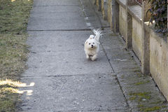 My dog Stock Photography