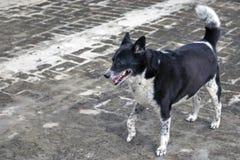 Dog Wanna Play stock photography