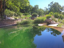 My dream swimming pond. Organic shaped natural swimming pond in a lush beautiful garden Stock Photo