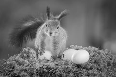 My egg Royalty Free Stock Photography