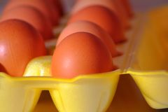 My eggs in the morning sun royalty free stock images