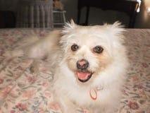 My Emma. Photo of my dog Royalty Free Stock Images