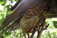 Big wide eyes Royalty Free Stock Photo