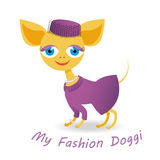 My fashion doggy royalty free stock photography