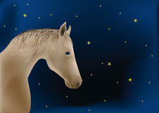My favorite horse Royalty Free Stock Image