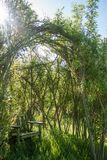 Favoirite seat in the garden. My favourite seat in the garden. A wooden seat with a willow arch above. Taken on a sunny afternoon in the garden Royalty Free Stock Photo