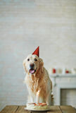 My first birthday Royalty Free Stock Image