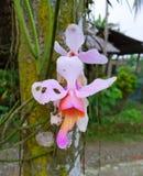 A beautiful flower blooming during rainy season, Banmukh Chutia Gaon, Sivasagar stock photo