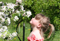 My first spring. Small girl and blooming tree royalty free stock images