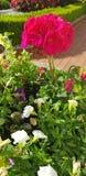 My Flower stock image