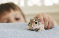 My friend the gerbil Stock Photo