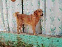 My fun dog Stock Photography