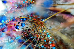 My galaxy. Dandelion seed sprinkled with colors Stock Photo