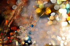 My galaxy. Dandelion seed sprinkled with colors Royalty Free Stock Image