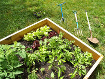 My Garden Stock Image
