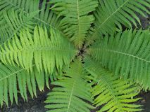 My garden fern royalty free stock photos