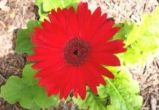 My garden stock images