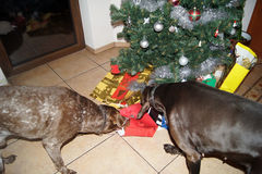 ``This is my gift, and that your rest we leave them``. Dogs also need their own Christmas stock photo