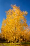My Golden autumn royalty free stock photos