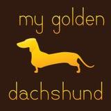 My golden dachshund Royalty Free Stock Photos