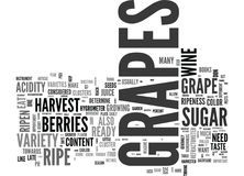 Are My Grapes Ready To Harvest Word Cloud Royalty Free Stock Photography