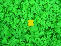 My happy day. In green grass royalty free stock photography