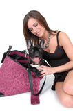 My Happy Dog. Beautiful fashionable woman with her French Bull dog in her carry around bag. Woman toting her dog around. Travel Dog Stock Images
