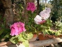 Flower. My home garden beautifying my surrounding Stock Photo
