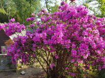 My home in pombia flowers royalty free stock photos