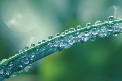 Freshness. My images are about mindfulness in connection to looking closer at nature and its structure royalty free stock photography