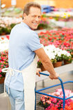 My job is my passion. Rear view of handsome mature man in apron using a cart full of potted plants and while standing in a greenhouse Stock Images