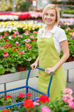 My job is my passion. Top view of beautiful young woman in apron using a cart full of potted plants and while standing in a greenhouse Stock Images