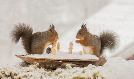 That is my king. Close up of  red squirrels with a chess piece in hands with a board while snowing Stock Photography