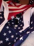 My kitten stock image