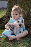 My kittens Royalty Free Stock Photography
