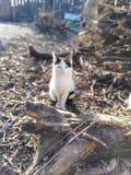 My kitty royalty free stock photography