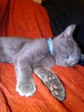 Kitty cat. My kitty cat when he was a kitten sleeping royalty free stock photo
