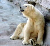 My Little Corner. White polar bear.Buffalo Zoo,Buffalo,New York Stock Photo