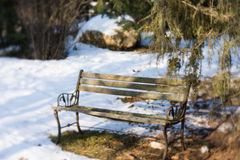 My little garden. This winter Royalty Free Stock Photos