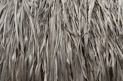 Texture of Thatched from Imperata cylindrica Thailand royalty free stock photos