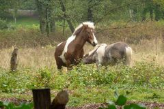 My little pony in the field stock image
