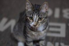My little Pretty Kitty stock image