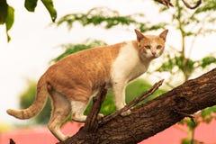 Myśliwego kot Obrazy Royalty Free