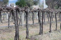 Myśliwy doliny winogrady Obrazy Royalty Free