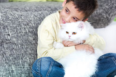 My lovely cat Stock Image